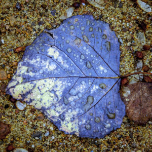 Fall, Weather and Seasons, digital art, fall, fall colours, fall foliage