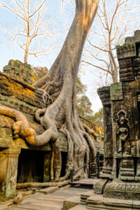 Asia, Cambodia, HDR, MacPhun Aurora HDR, Siem Reap, Ta Prohm Temple