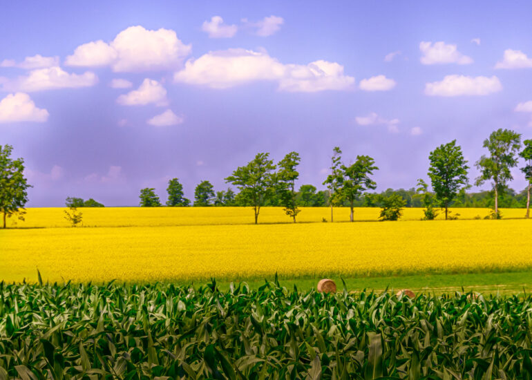 Canada, HDR, HDR Efex Pro, Hatherton, North America, Ontario, Summer, business type, canola, clouds, farming, industry, landscape, rapeseed, rural, tree, trees