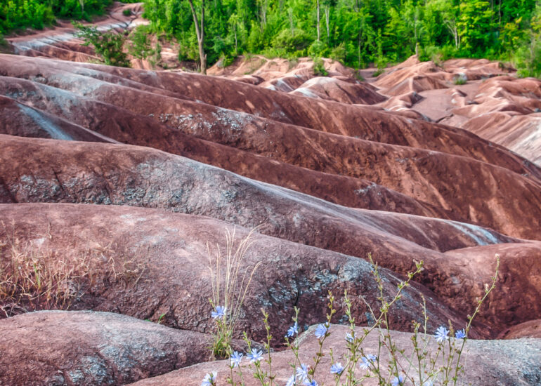 Canada, Cheltenham Badlands, HDR, HDR Efex Pro, North America, Ontario, flowers, foliage, landscape