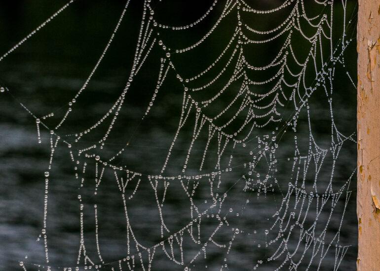 Canada, Haliburton, Kennisis Lake, Mike & Nina Maclaverty's cottage, North America, Ontario, animal, arachnid, cottage country, invertebrate, rain, spider web