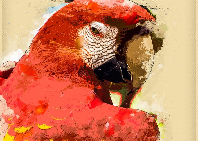 Ecuador, Guayaquil, Natural Historic Park, PS-Action_Uniqum, Portrait, South America, animal, artist, artistic, bird, body parts, colourful, digital art, face, head, parrot, parrots and toucans