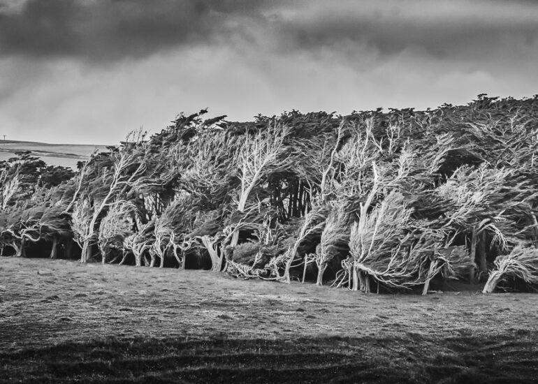ART, B&W, Catlins District, HDR, MacPhun Aurora HDR, Macrocarpa, Macrocarpa Trees, New Zealand, Oceania, Portfolio Print, Slope Point, South Island, black & white, digital art, landscape, panoramic, photography, storm, tree