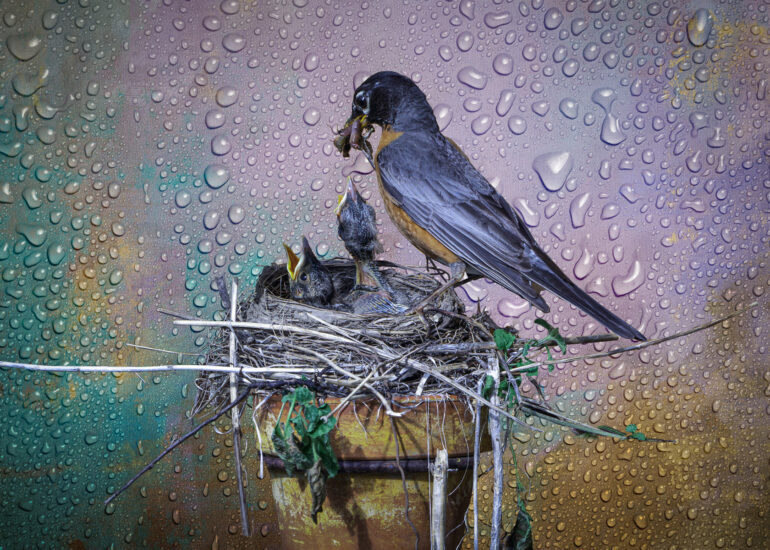 151 Conservation Way, Canada, Collingwood, Fine-Art, North America, Ontario, Silver Glen, TEXTURES, animal, baby, bird, bird house, bird nest, children, composite, digital art, feeding, infrastructure building, other birds, robin